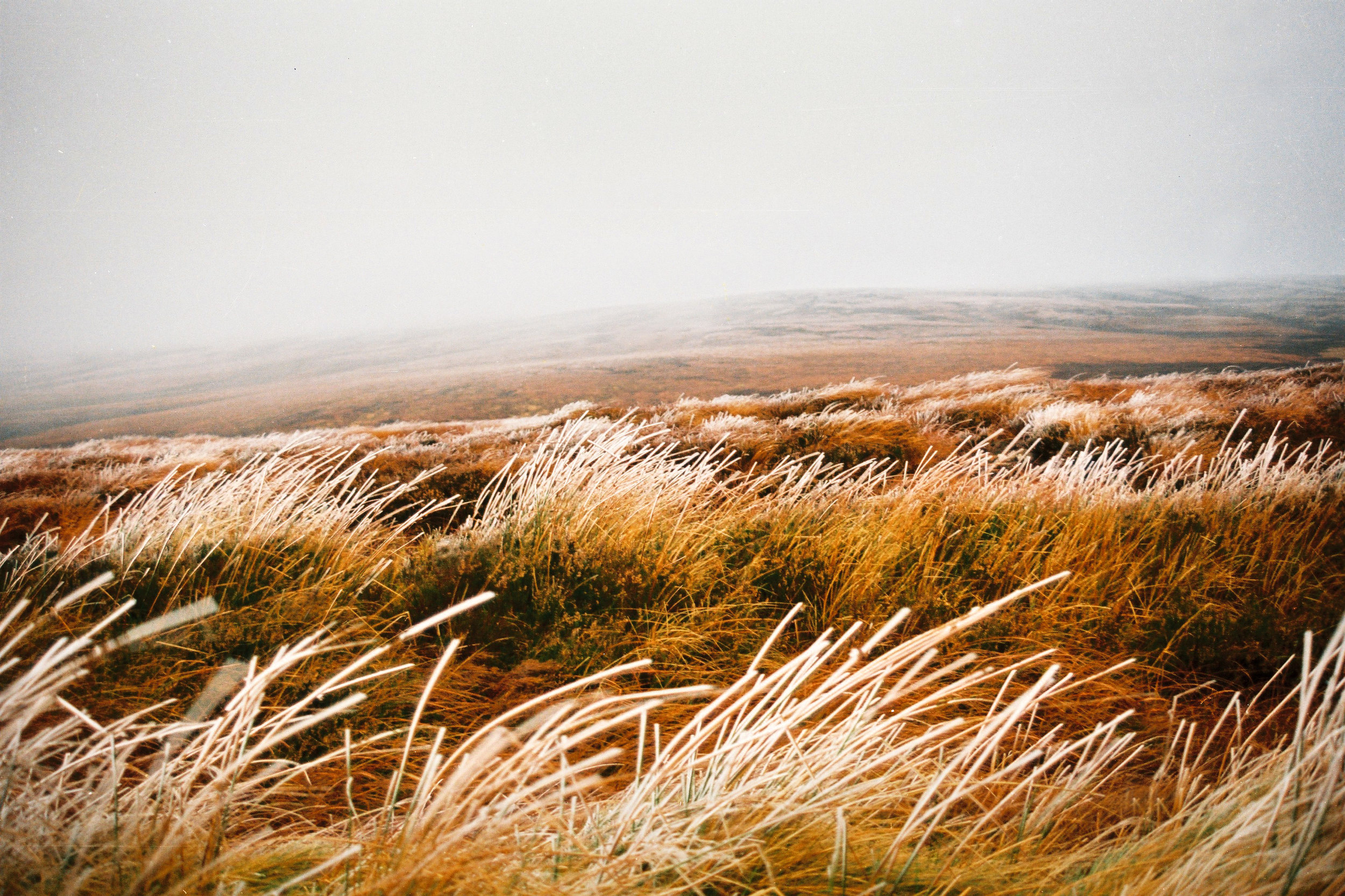 winter grasses.jpg