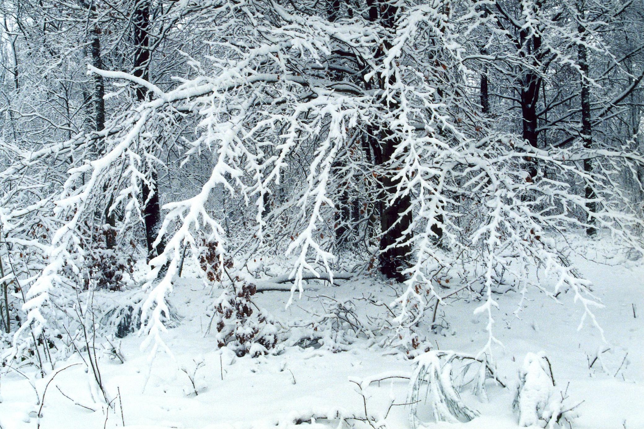 winter tracery.JPG
