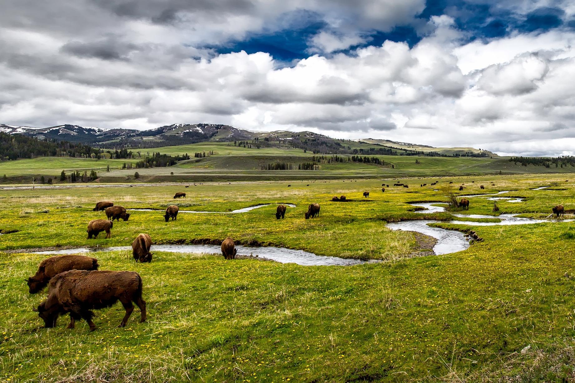 landscape-water-nature-grass-wilderness-mountain-437409-pxhere.com.jpg