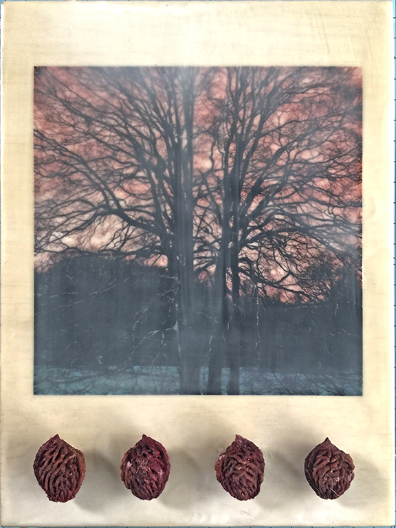 treepits.jpg