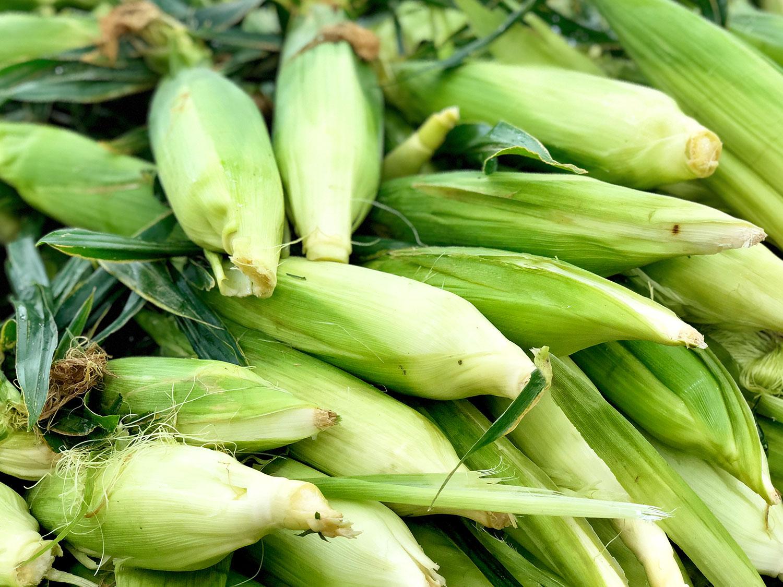 Corn-main.jpg