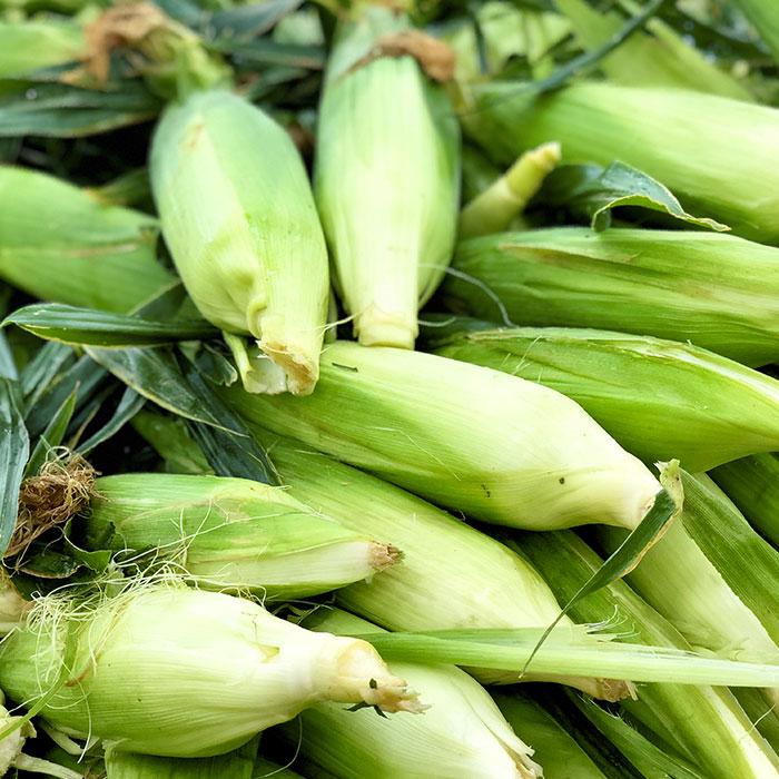 Corn-main-700x700.jpg
