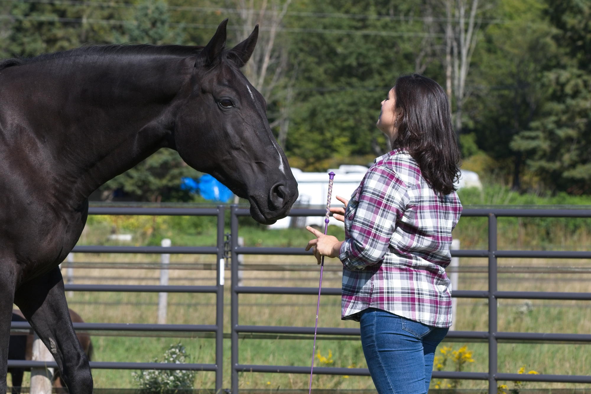 true-presence-horse-sense-carmen-theobald-grace-round-pen-equine-facilitated-learning-efl-eponaquest-instructor-coach.jpg