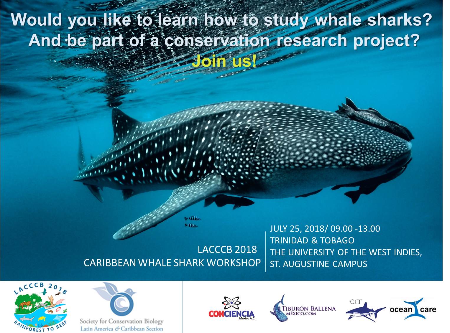 Flyer 3 Whale Shark W.png