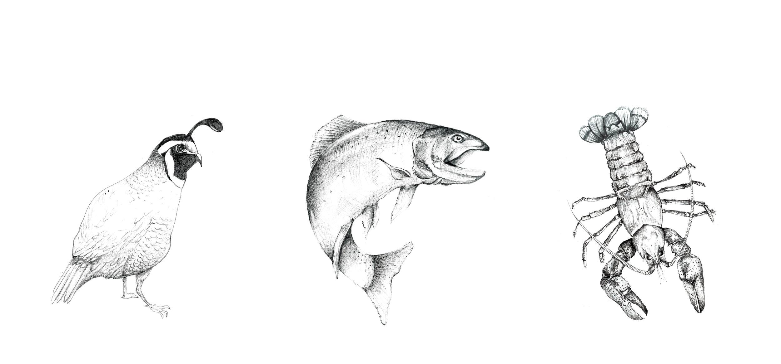 Illustrations_webportfolio_v13.jpg