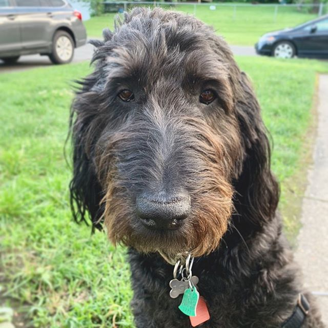 If you've been to WE late night you may have had the pleasure of meeting Mr. Ziggy - the pup who loves ALL the love! We are missing our pup big time while we're away on #nationaldogday. Can't wait to see this little face tomorrow!
