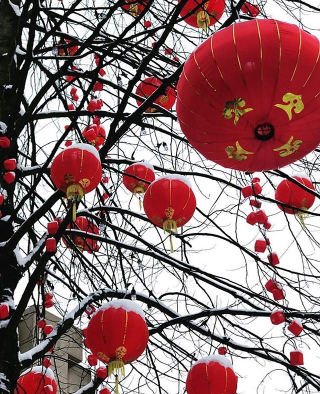 Snowy red lanterns on the Tree of Good Fortune at the Bute Robson Plaza. Stay warm everyone! 📷: @inkalinks