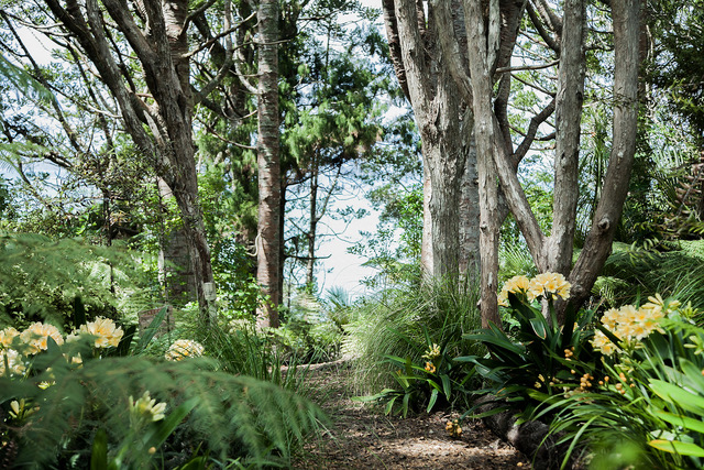 One of the glorious bushwalks at Omaio...