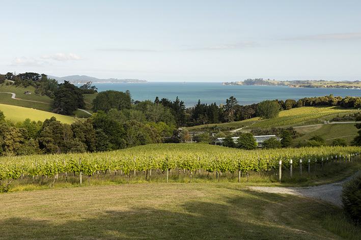 Brick Bay vines SMALL.jpg