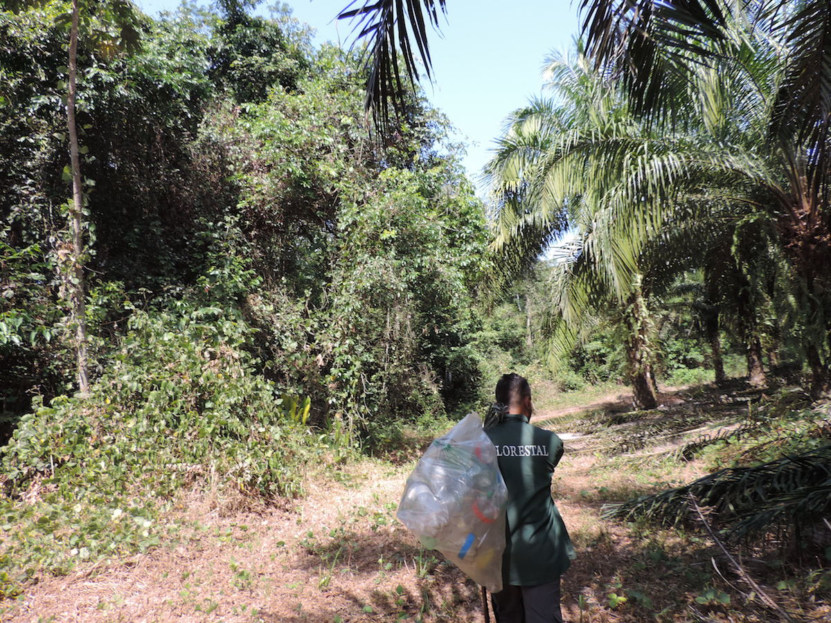 Flanked by forest patches on the left and oil palm on the right, a worker from a palm oil production company helps carry the orchid bee scent traps. Photo by Thaline Brito