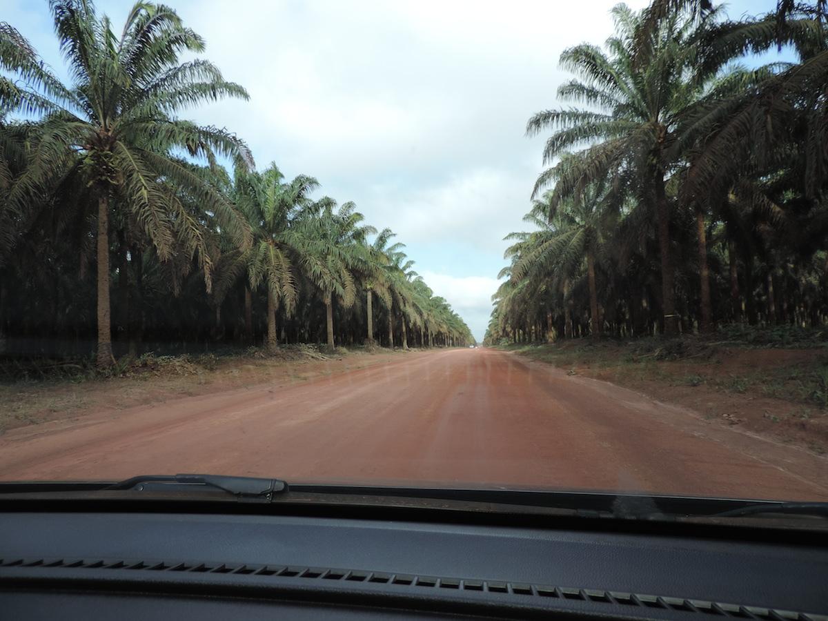 An oil palm plantation abuts a major road. Photo by Thaline Brito