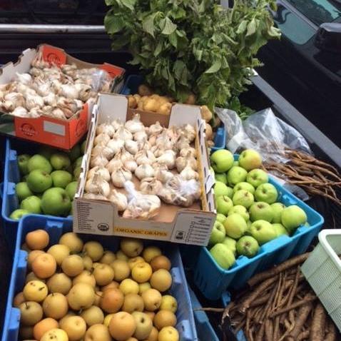 "U-Pick: Garlic, apples, asian pears, burdock root (""gobo"" in Japanese)"