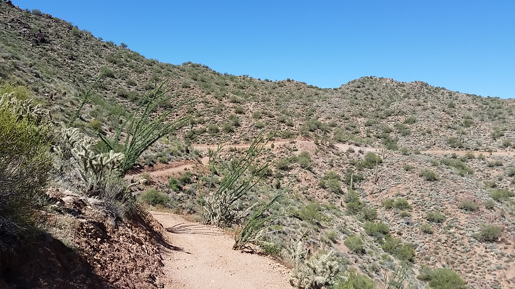 Fresh bench cut trail winds its way off the top of the McDowell Mountain.
