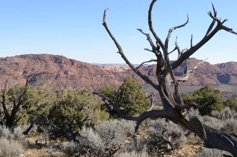antelope-DSC_0058.jpeg