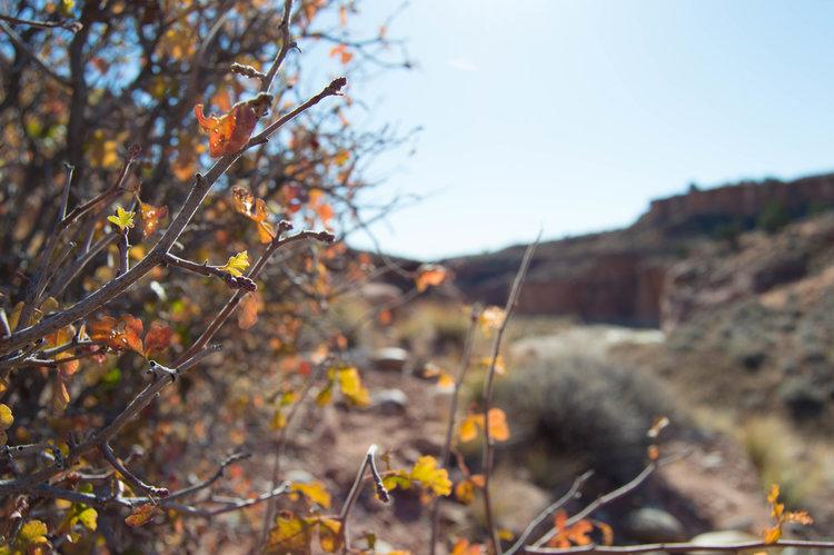 antelope-DSC_0079.jpg