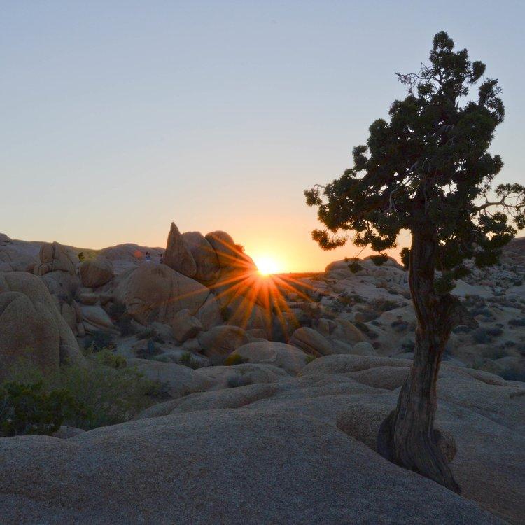 camping alone -joshua-tree-sunset.jpeg