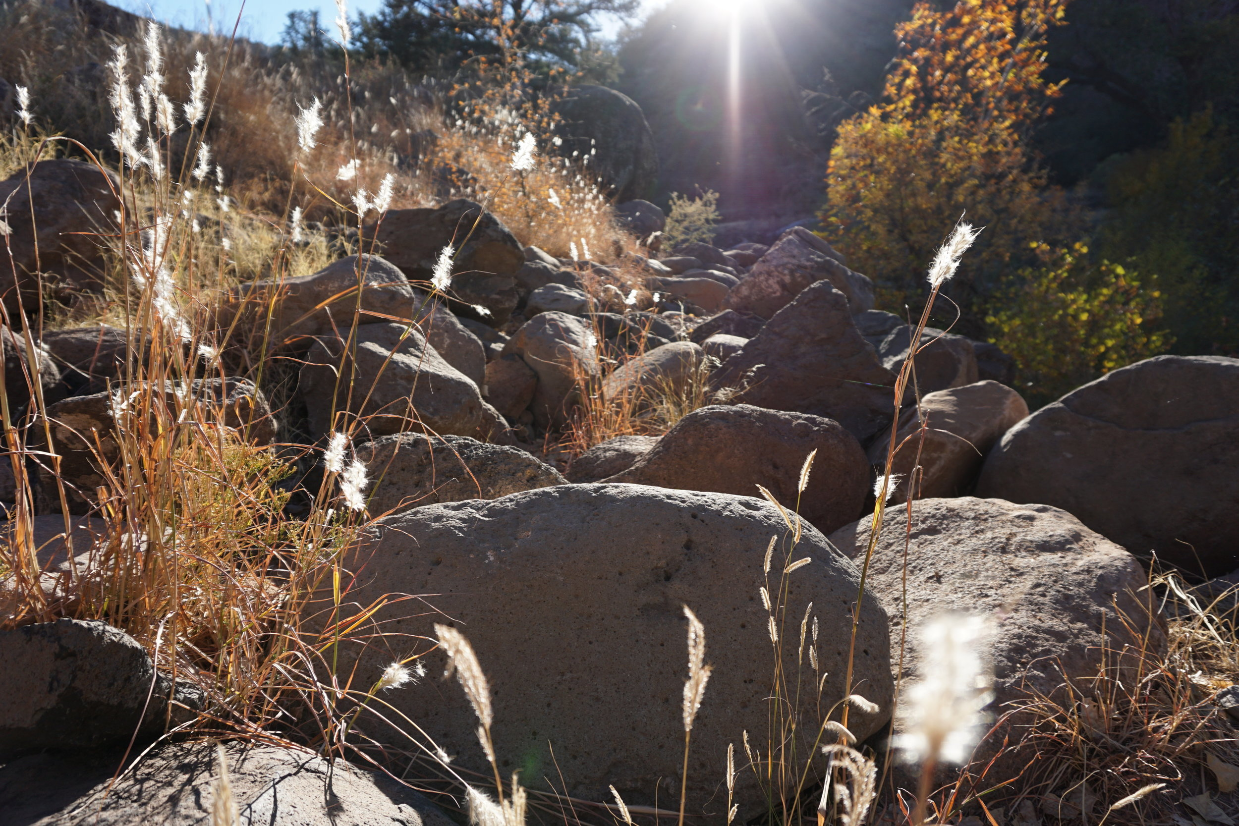 Fossil Creek - grass.jpg