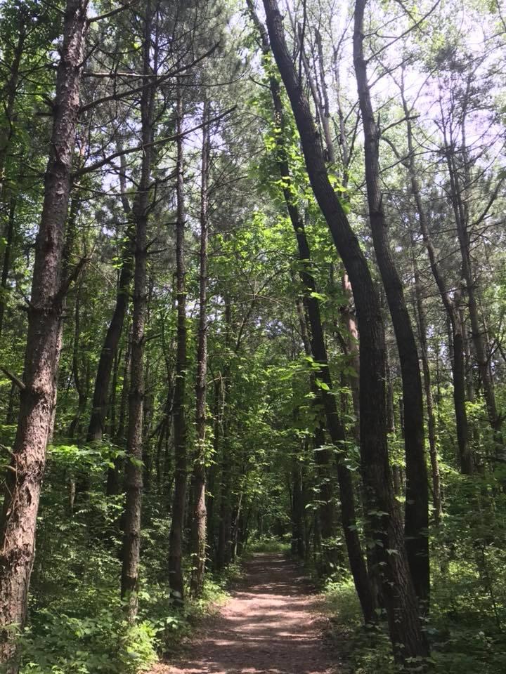 Trail (1).jpg