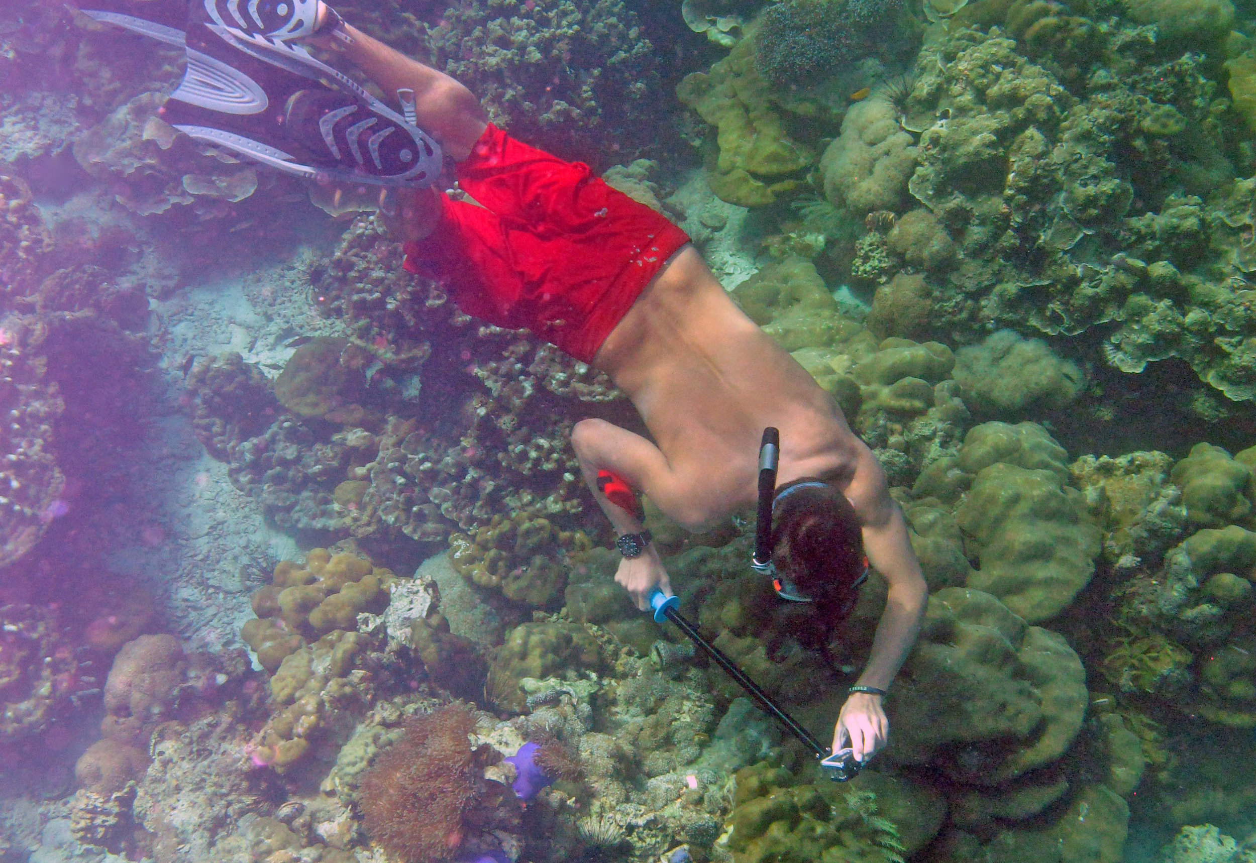 ThailandMarine EcosystemsJANuary 22–MARCH 5, 202015 Quarter Credits - Compare three islands and coral reef ecosystems across Thailand and IndonesiaGain skills for marine surveying, monitoring, field observation and conservationIdentify multiple fish and coral species while contributing to our multi-year surveyExamine issues affecting marine conservation and sustainability
