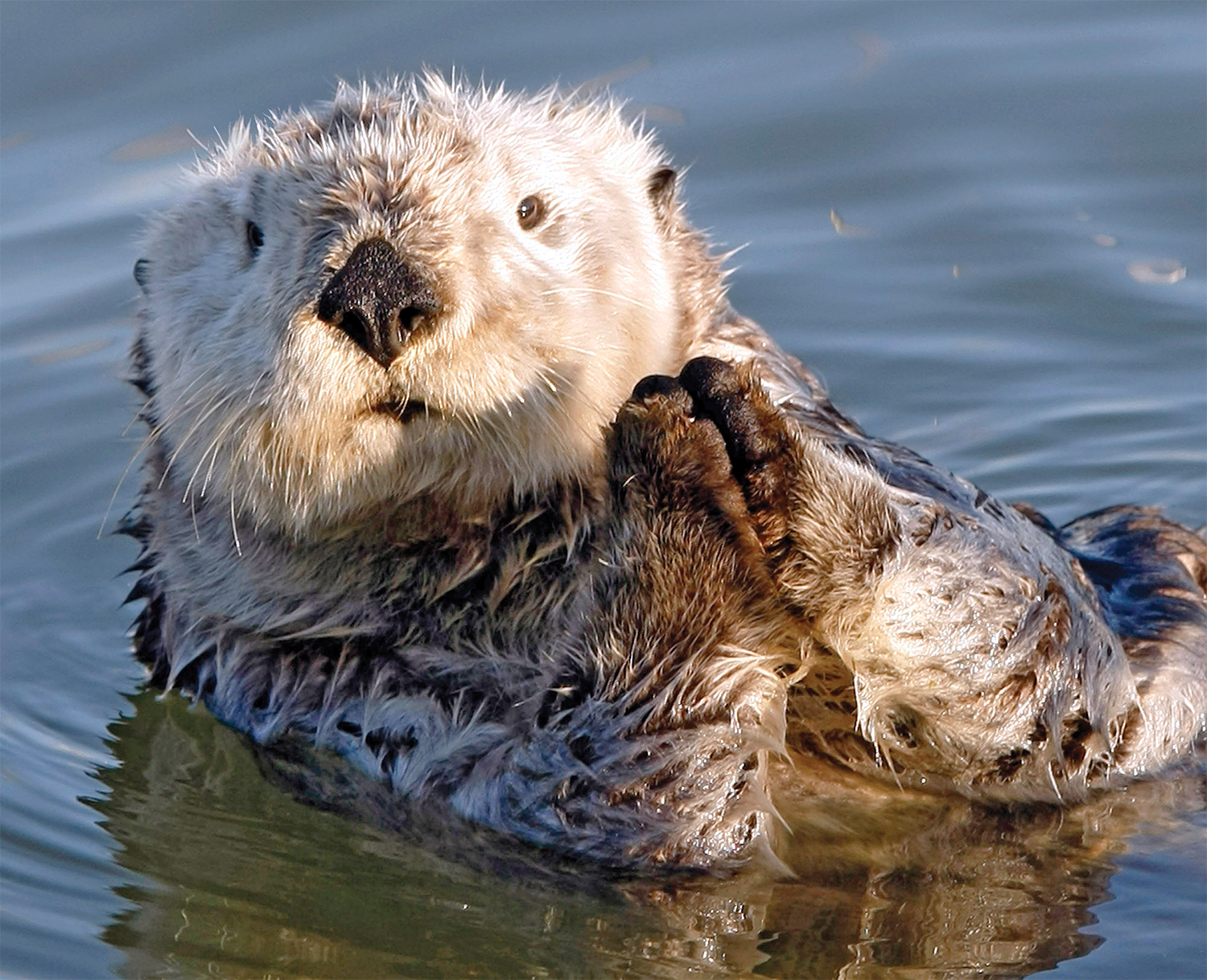 Big Sur color-sea-otter.jpg