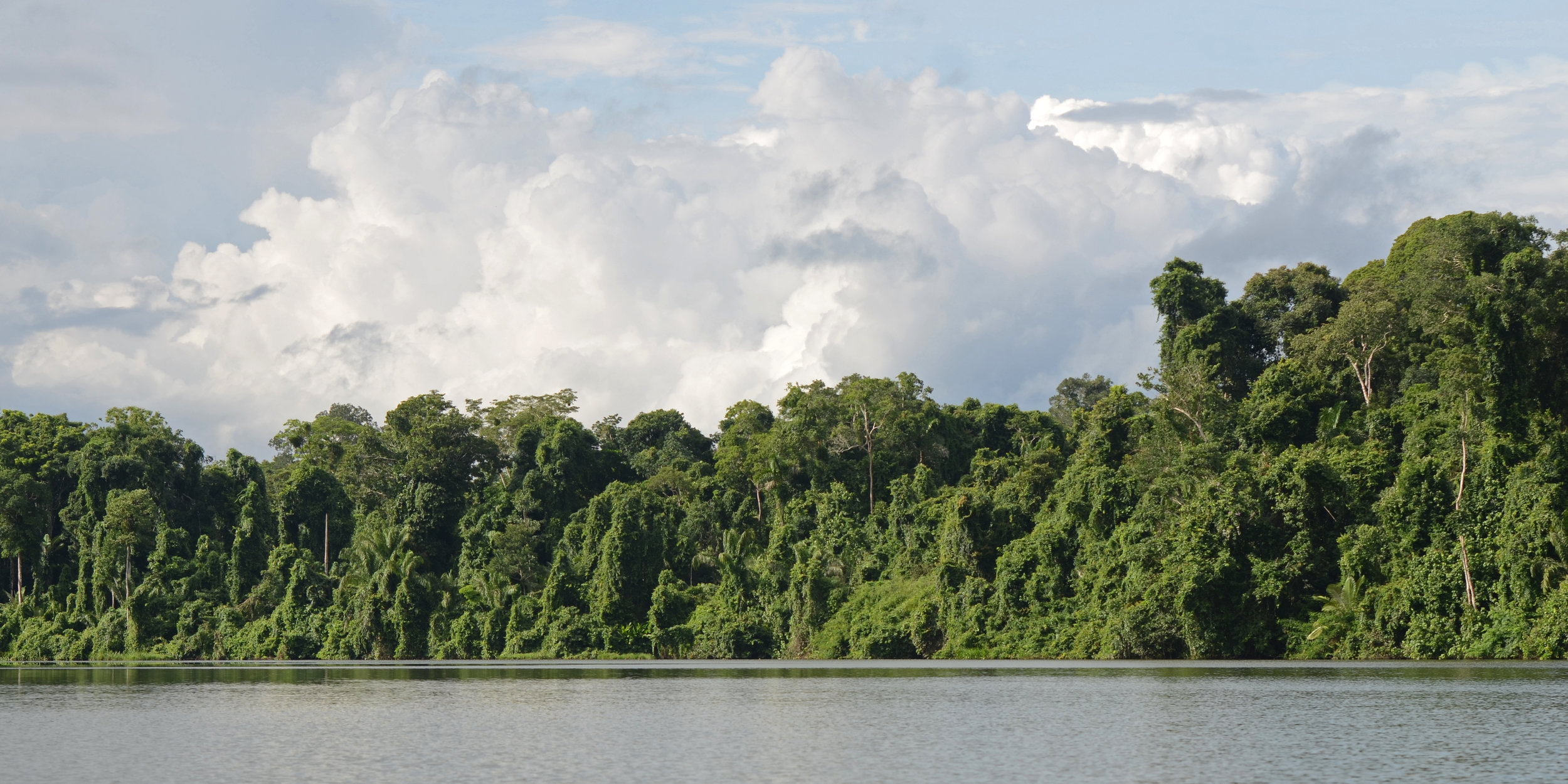 WS Peru Amazon river rainforest.jpg