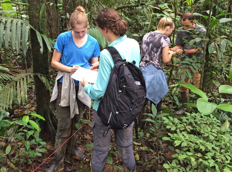Ecuador forest work IMG_0324.jpg