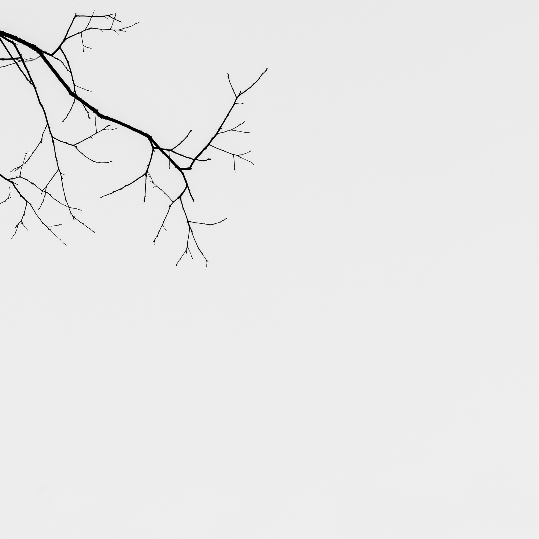 Mauzy-Tree-1.jpg