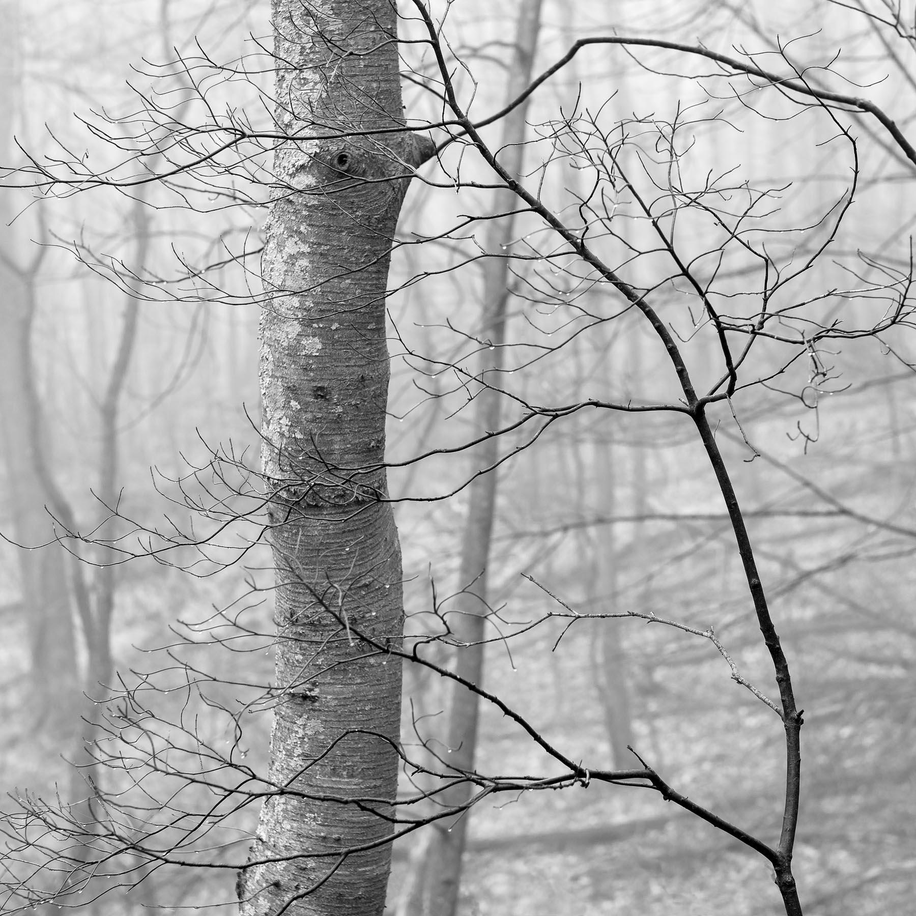 Mauzy-Tree-4.jpg