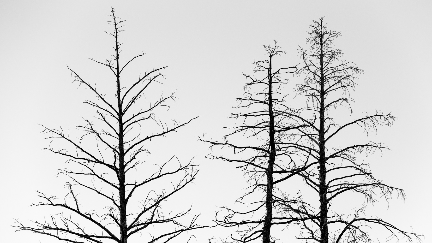 Mauzy-Tree-8.jpg