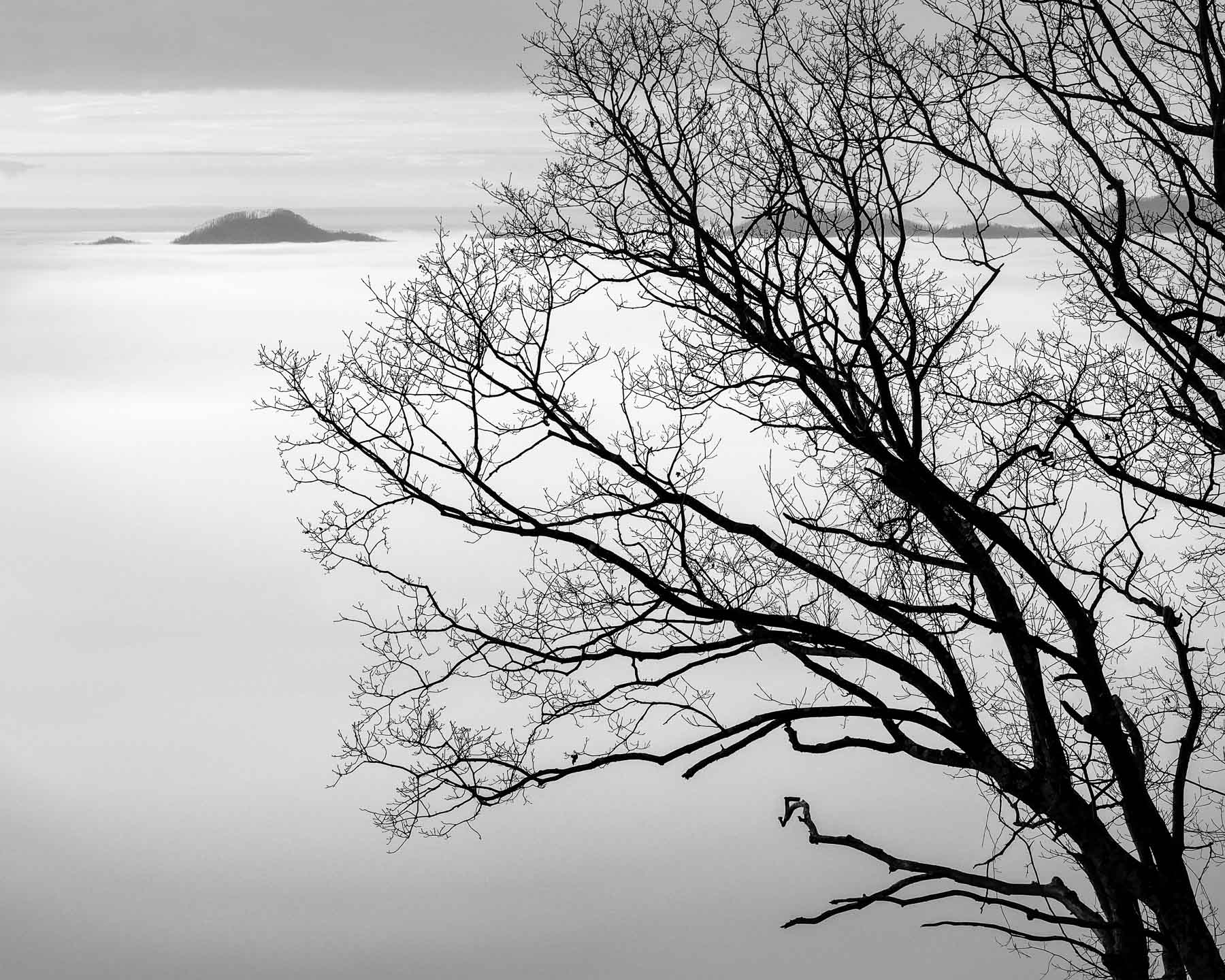 Mauzy-Tree-9.jpg
