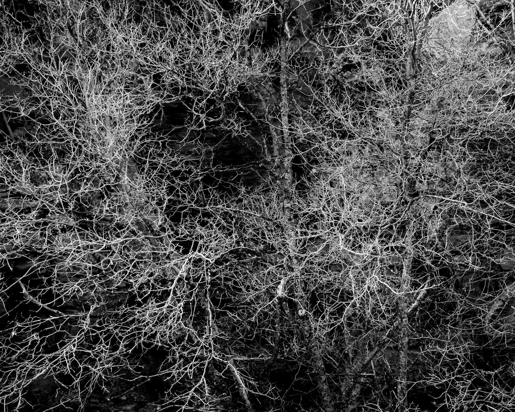 Mauzy-Tree-12.jpg