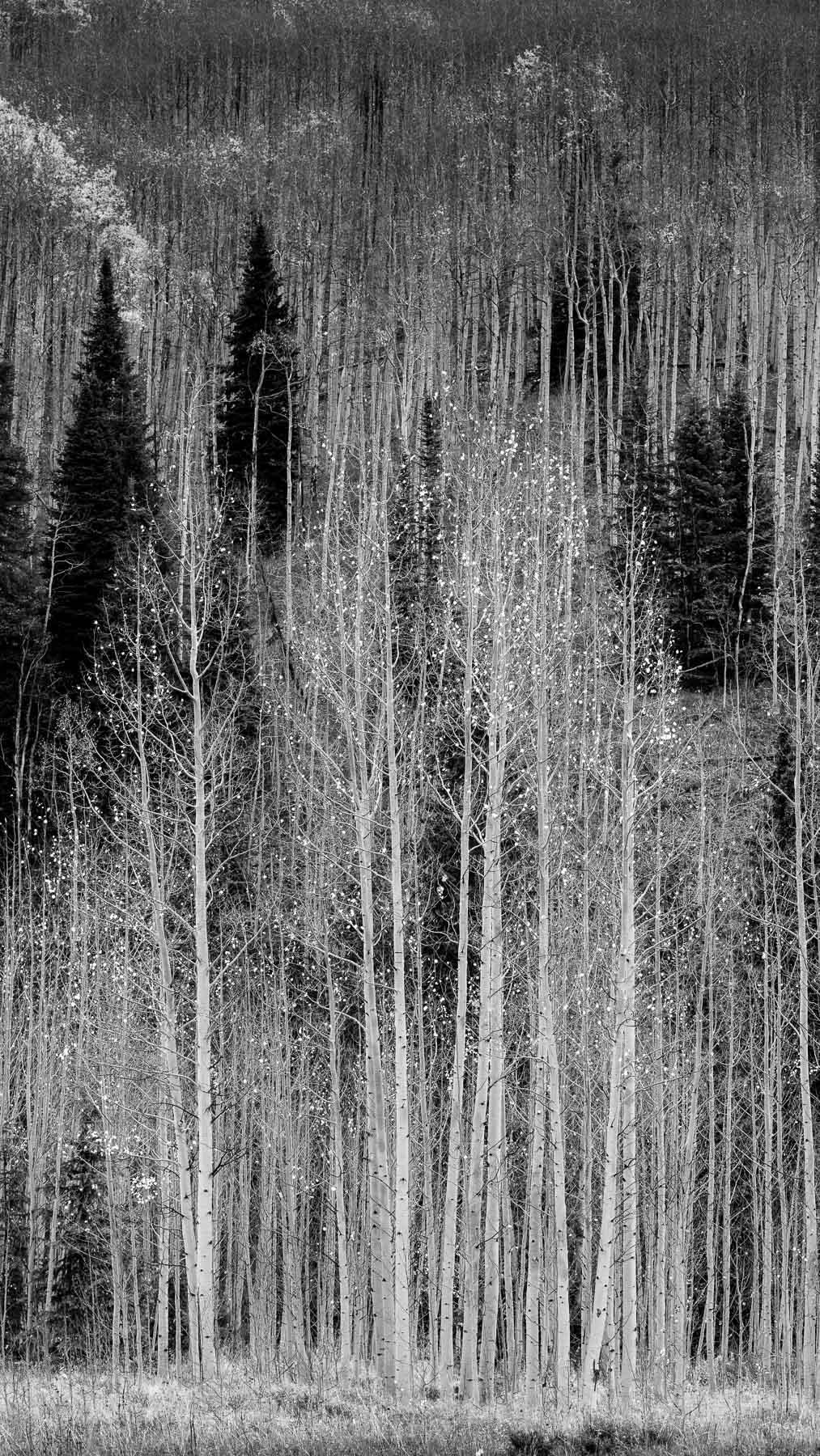 Mauzy-Tree-16.jpg