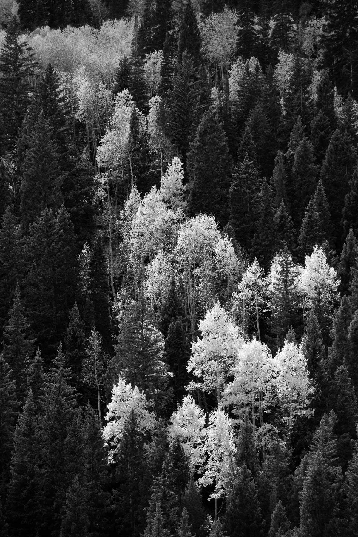 Mauzy-Tree-18.jpg