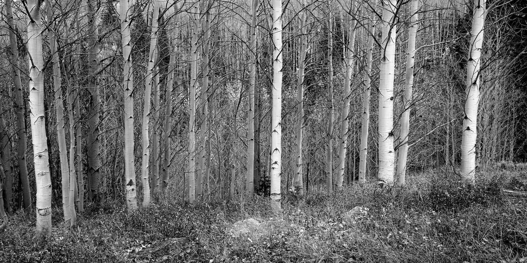 Mauzy-Tree-20.jpg