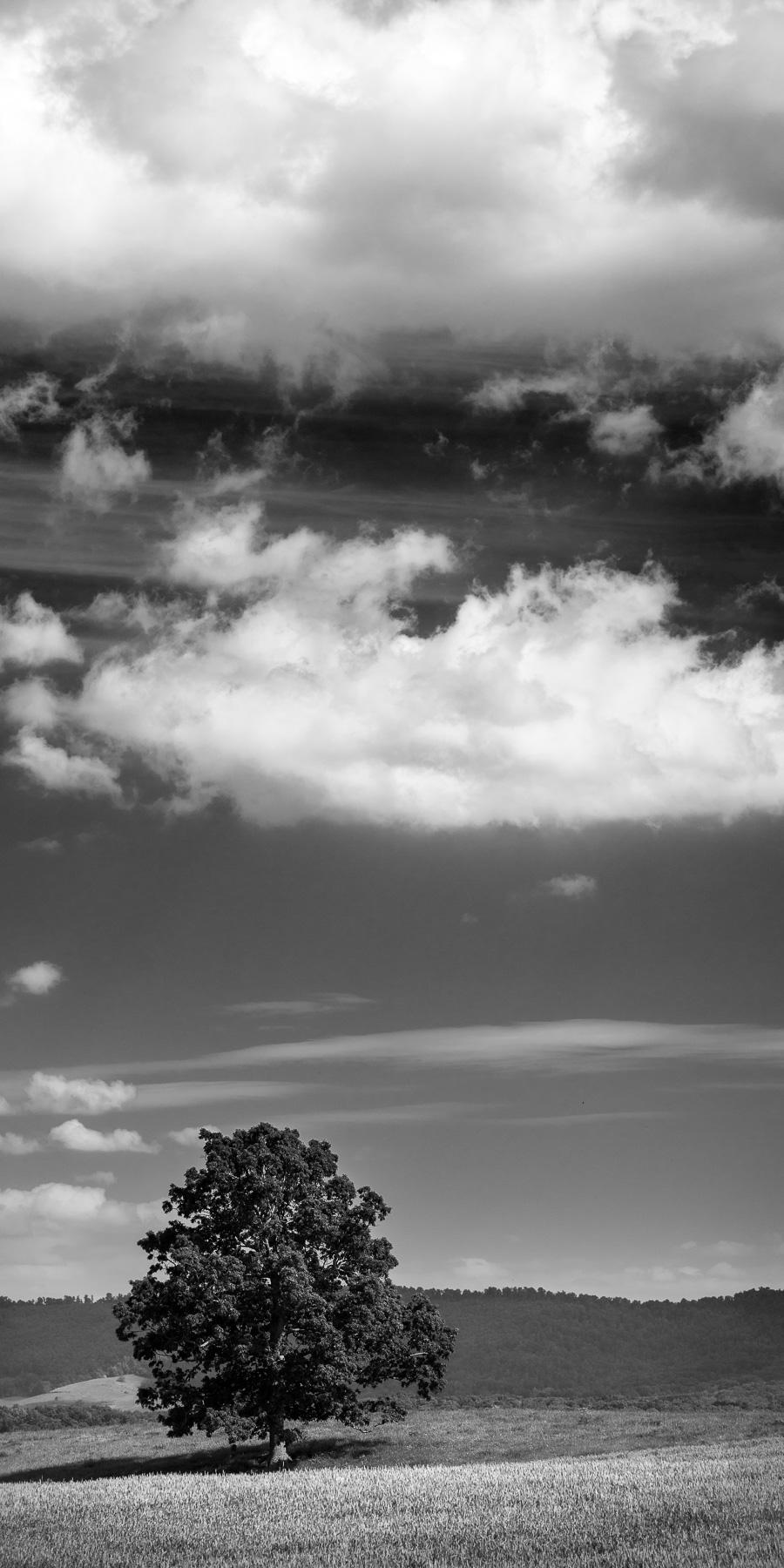 Mauzy-Tree-23.jpg