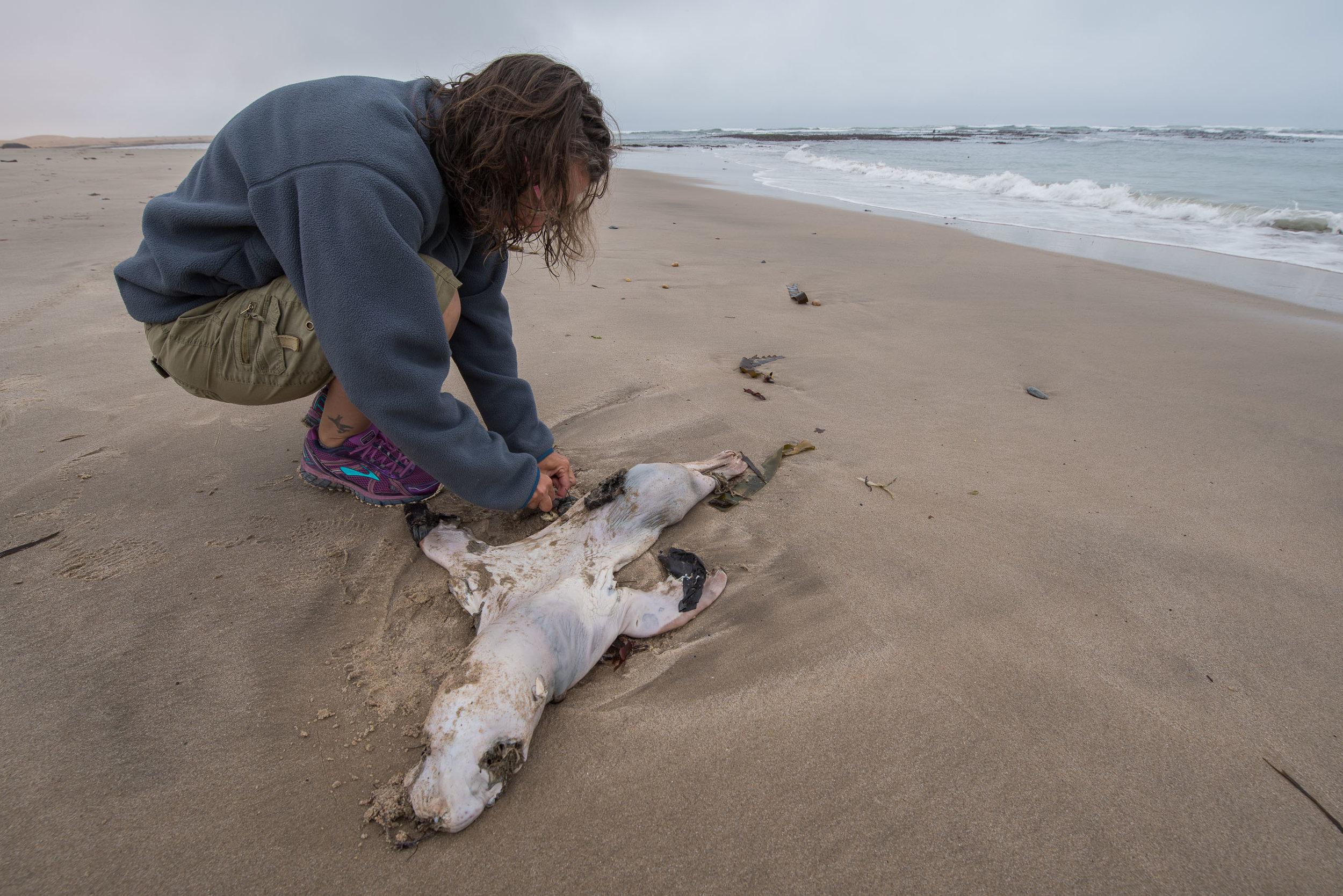 Dead Babies on the Beach