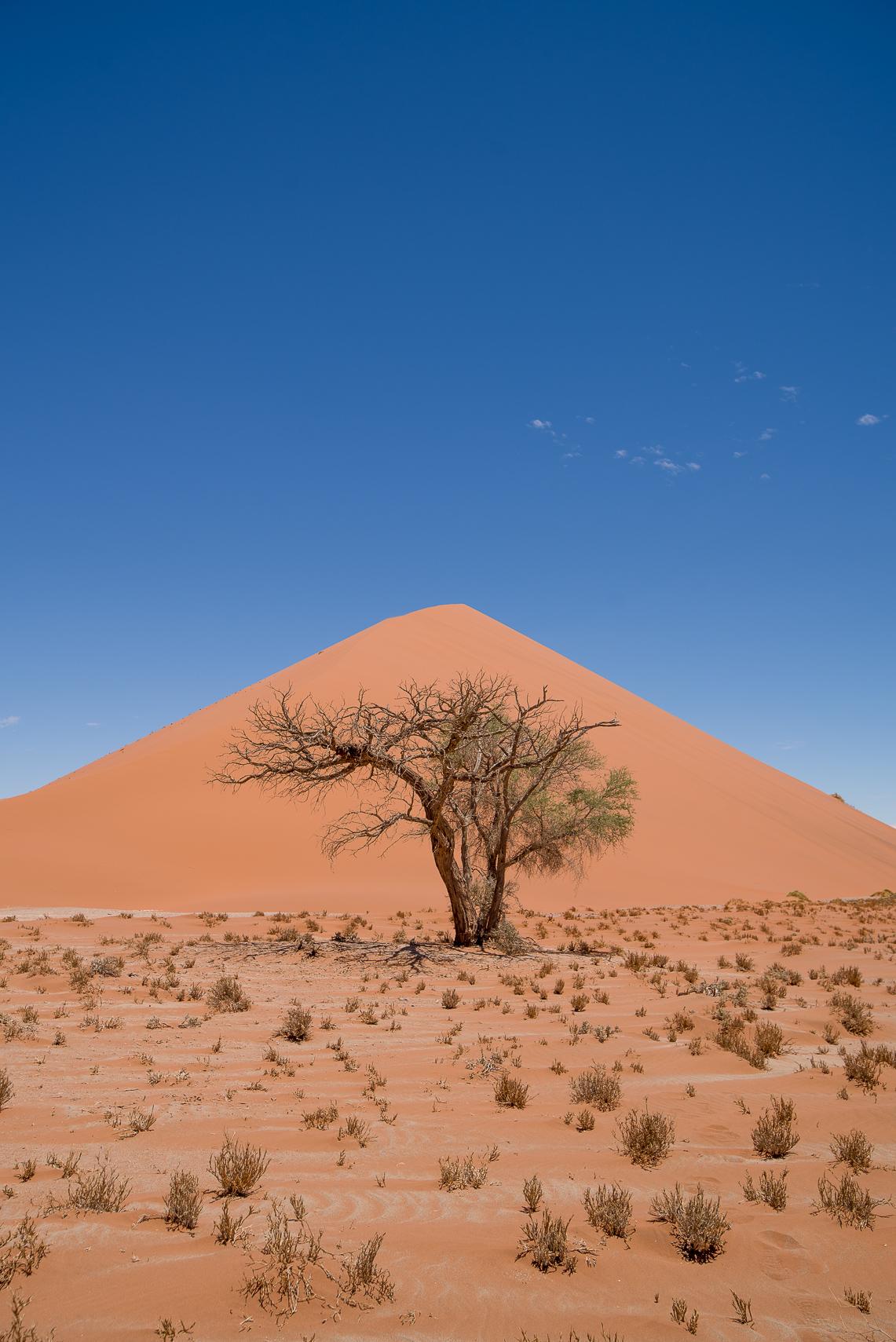 Dune 45. Namib Naukloft Park.
