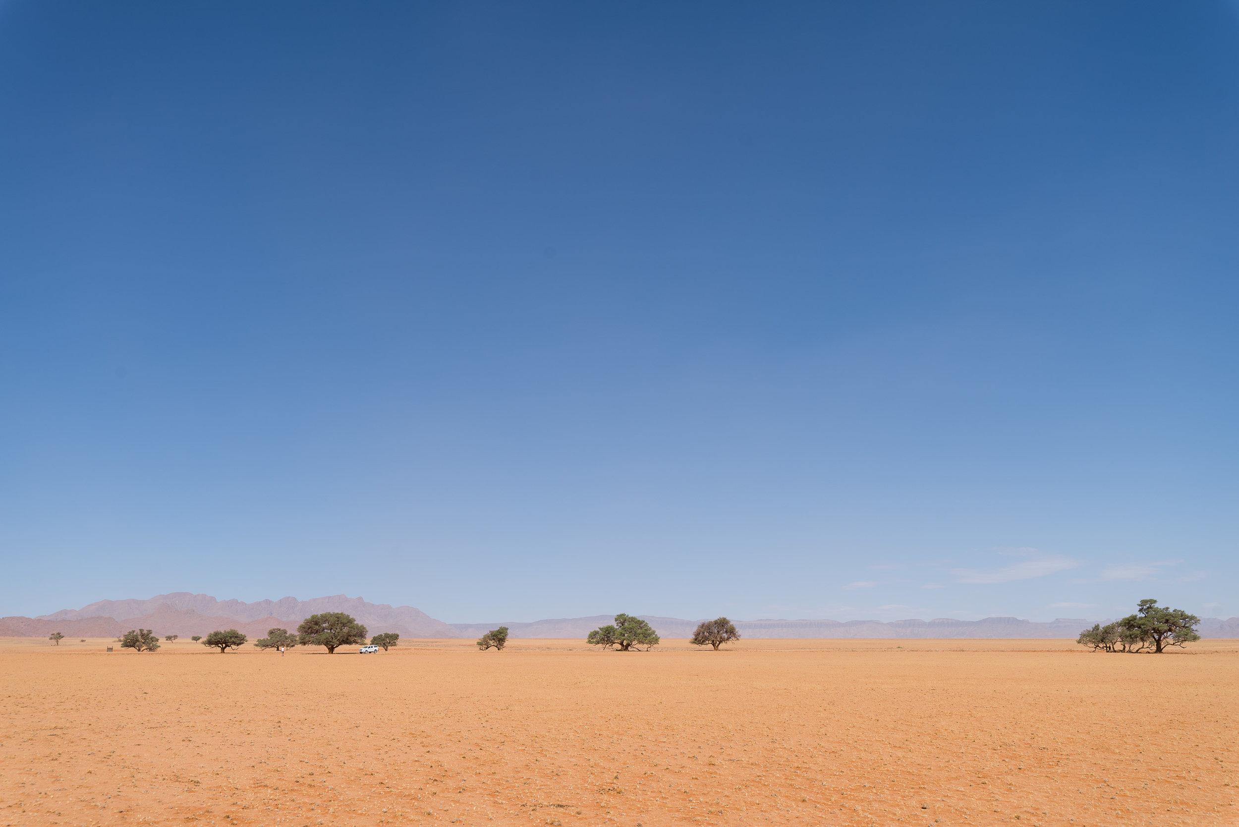 Elim Dunes area of Namib Naukloft Park.