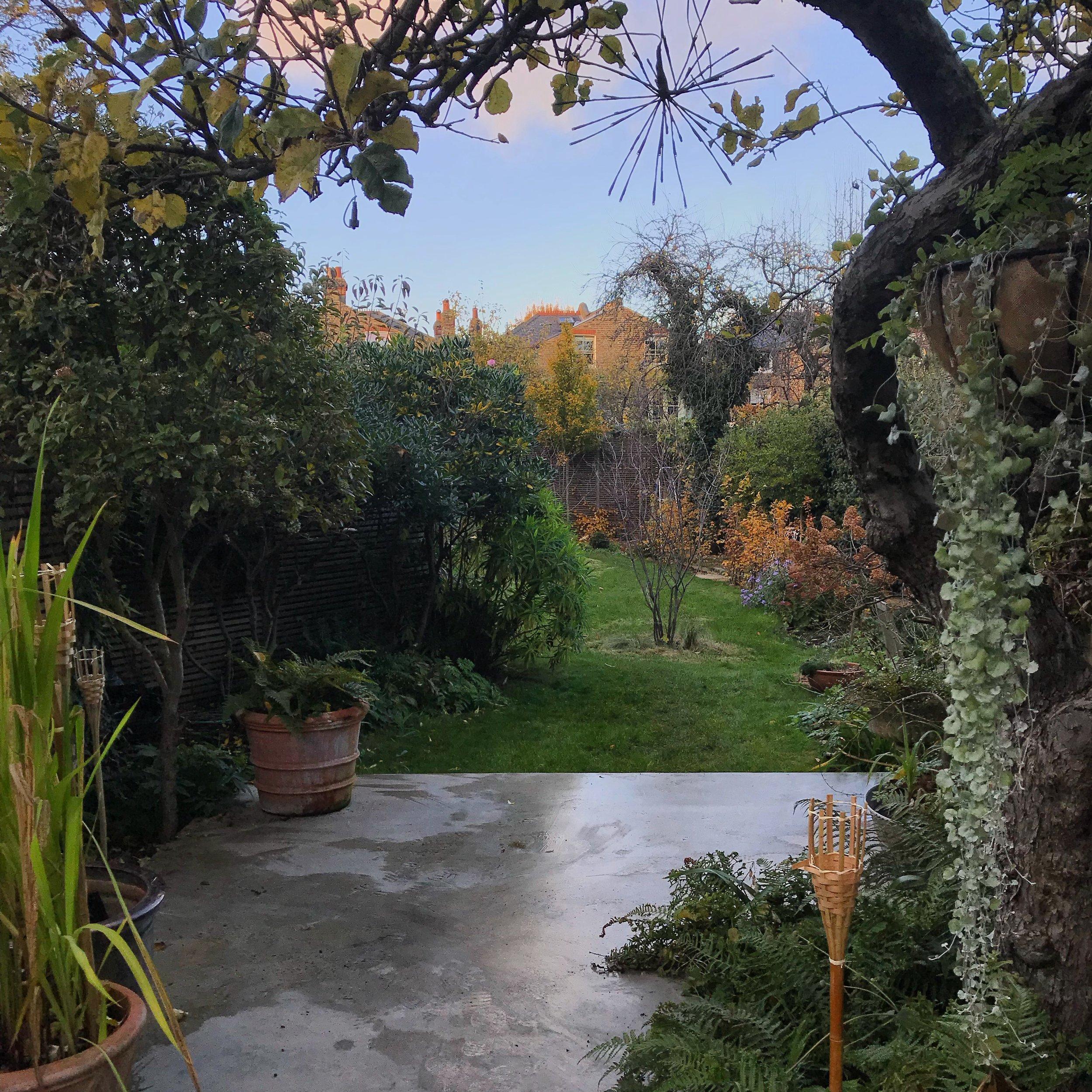 My Five Minute Garden, November 2018