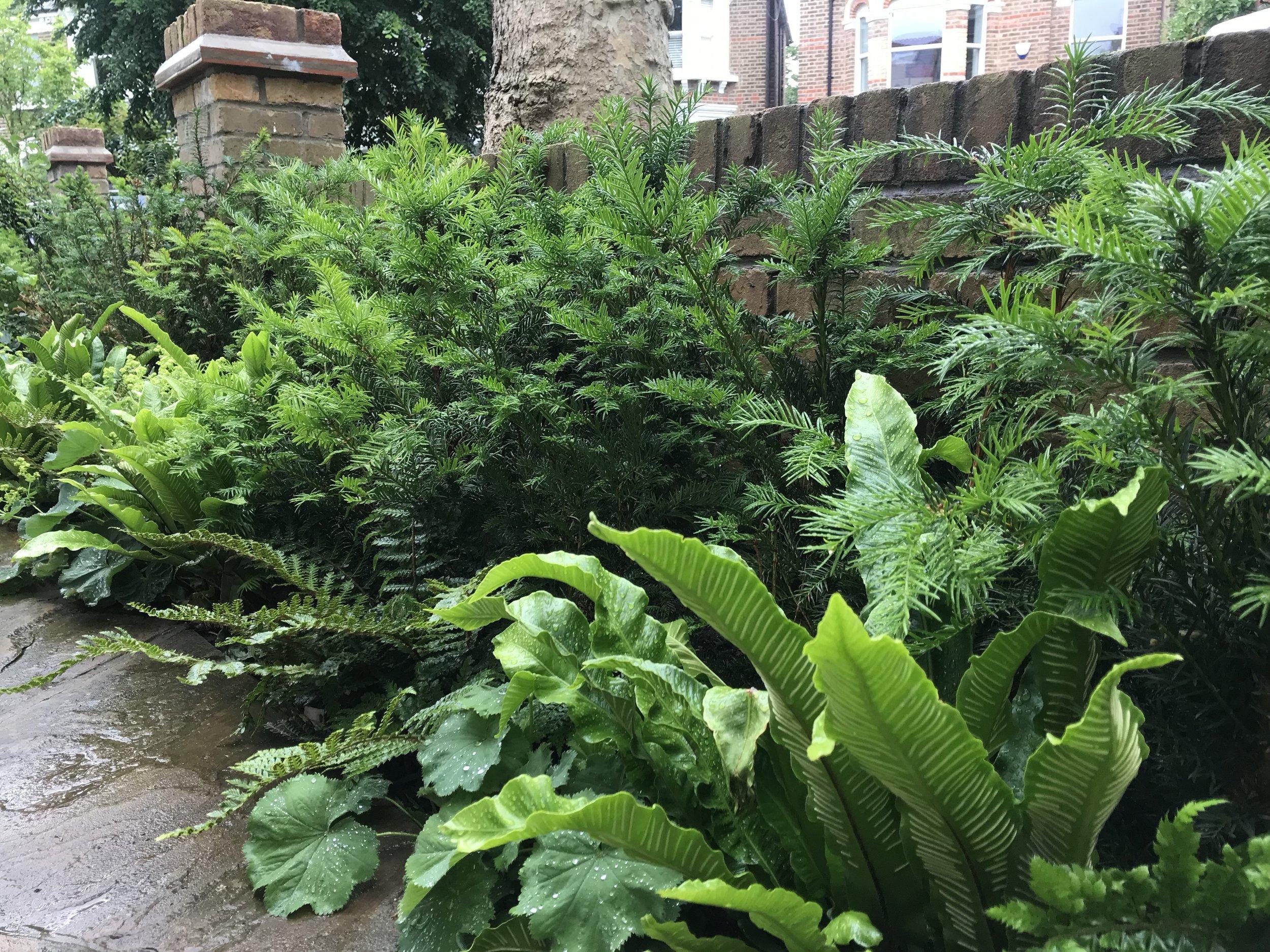 edging front garden