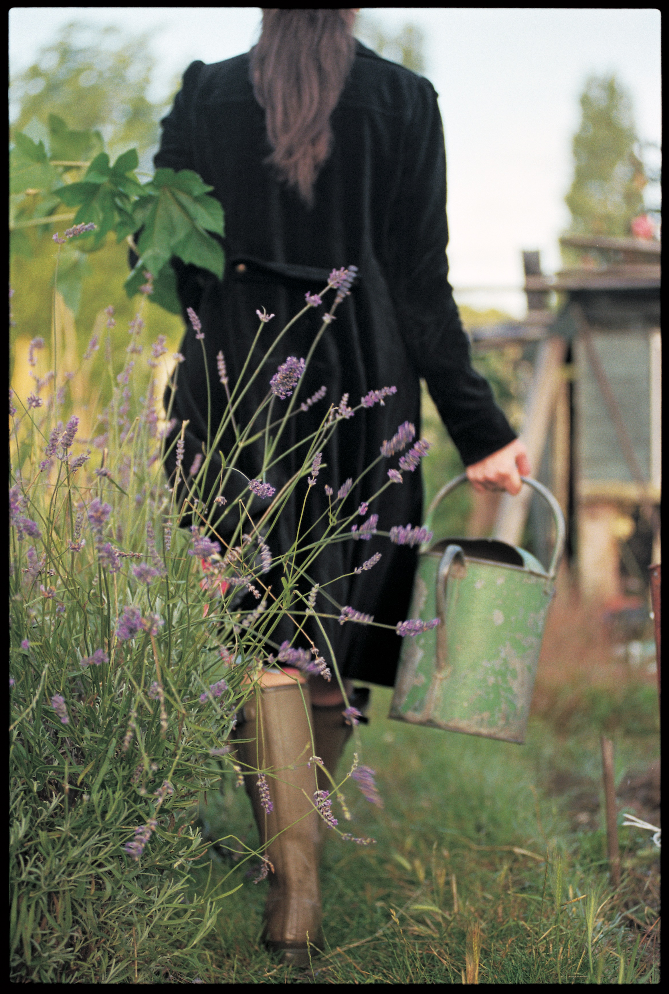 Me walking past some lavender that hasn't been chopped in a while! Image taken by Jill Mead