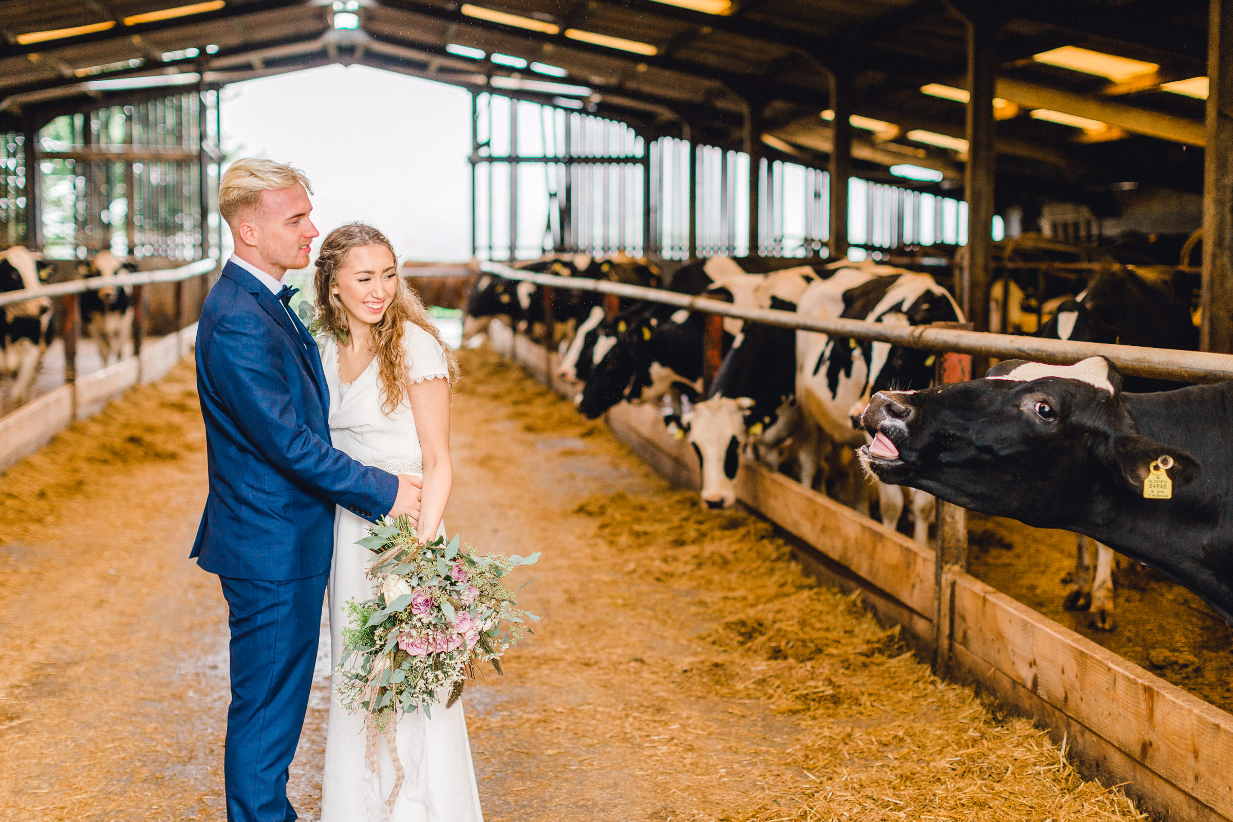 Bride and groom visiting the cowshed at Bashall Barn wedding venue