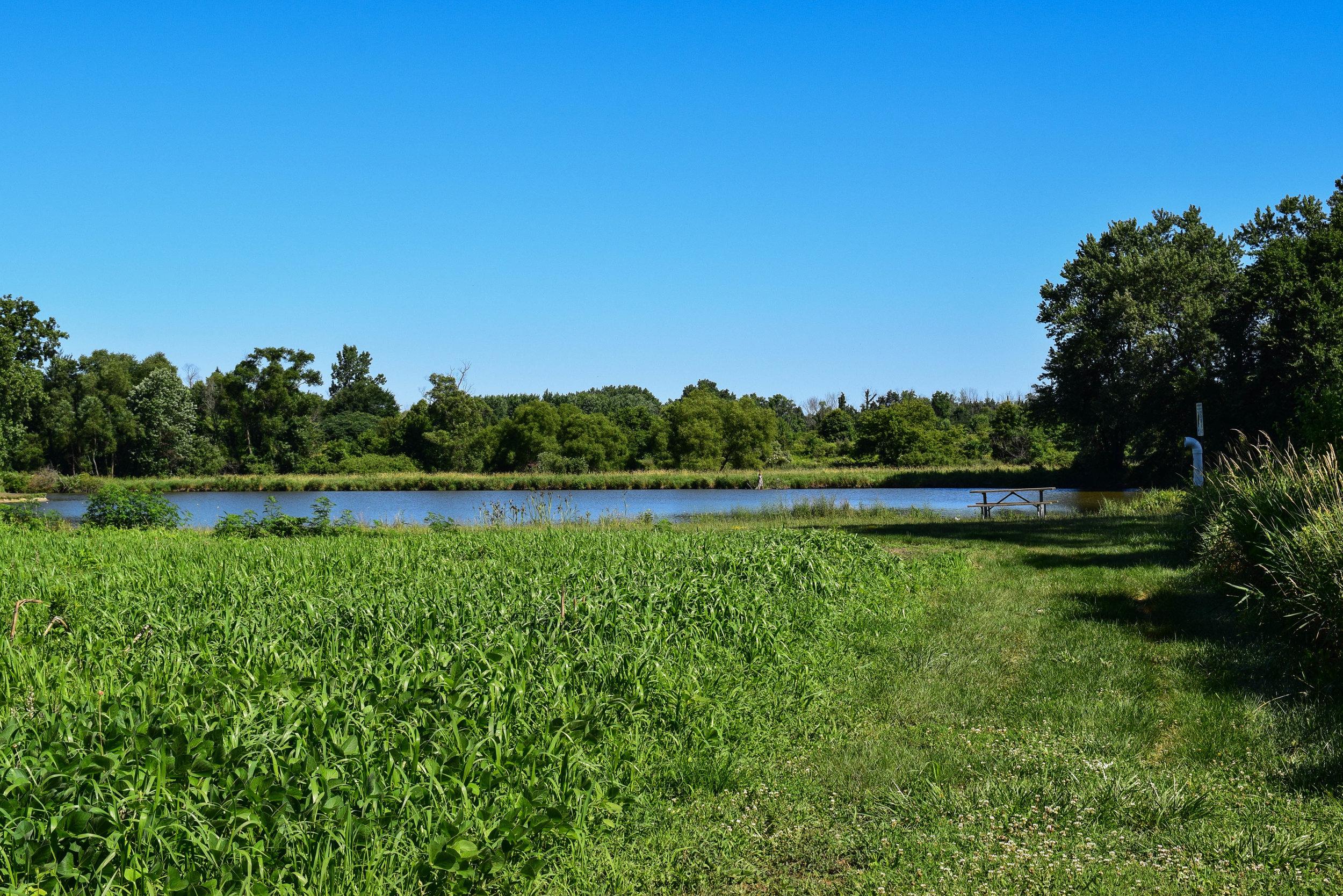 Brookdale Park-7.jpg