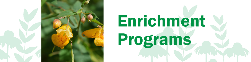 Wellness and Enrich Program Header.png