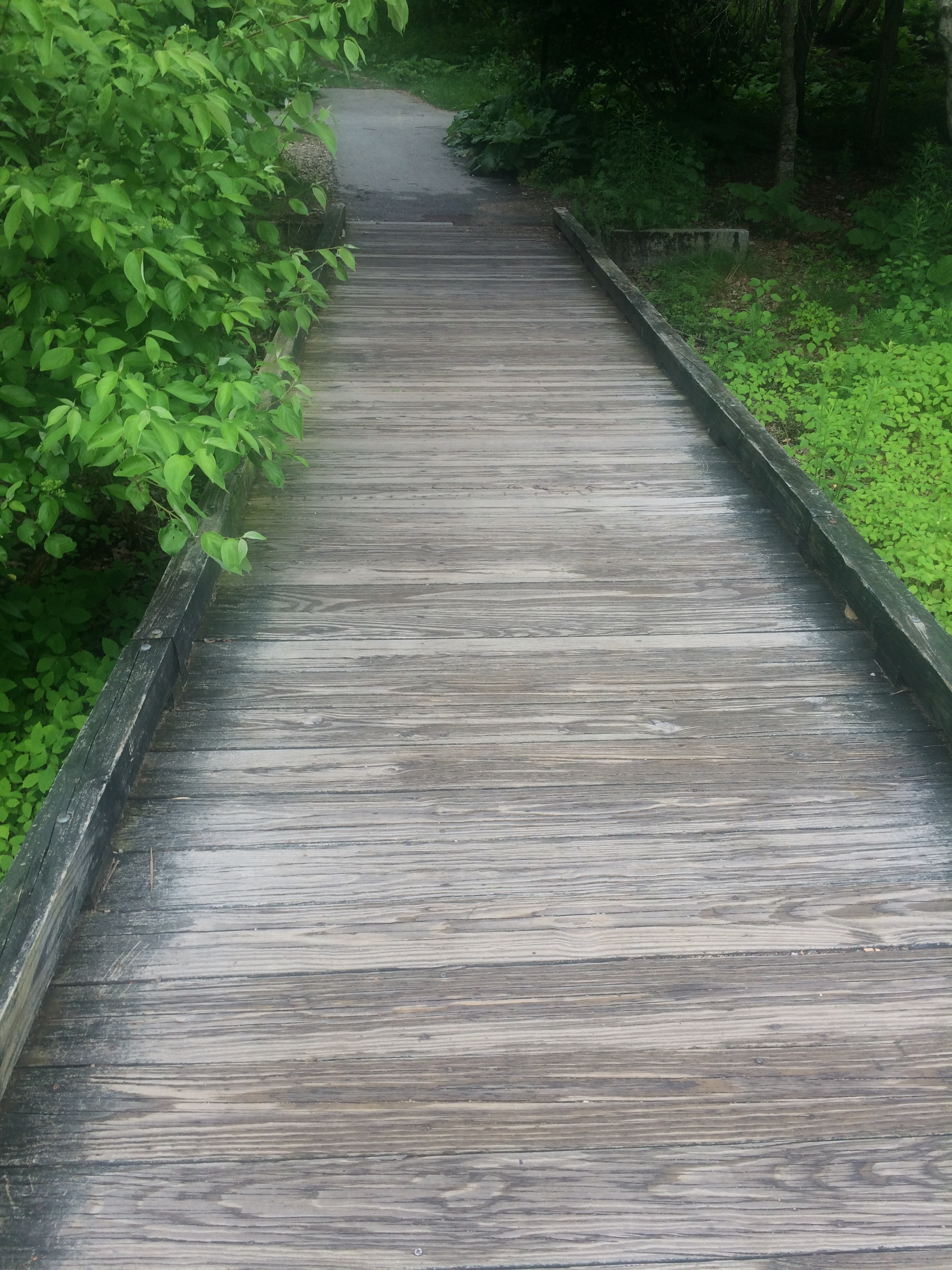 Find your true path with Ayurveda: Diet & Lifestyle Consultations!