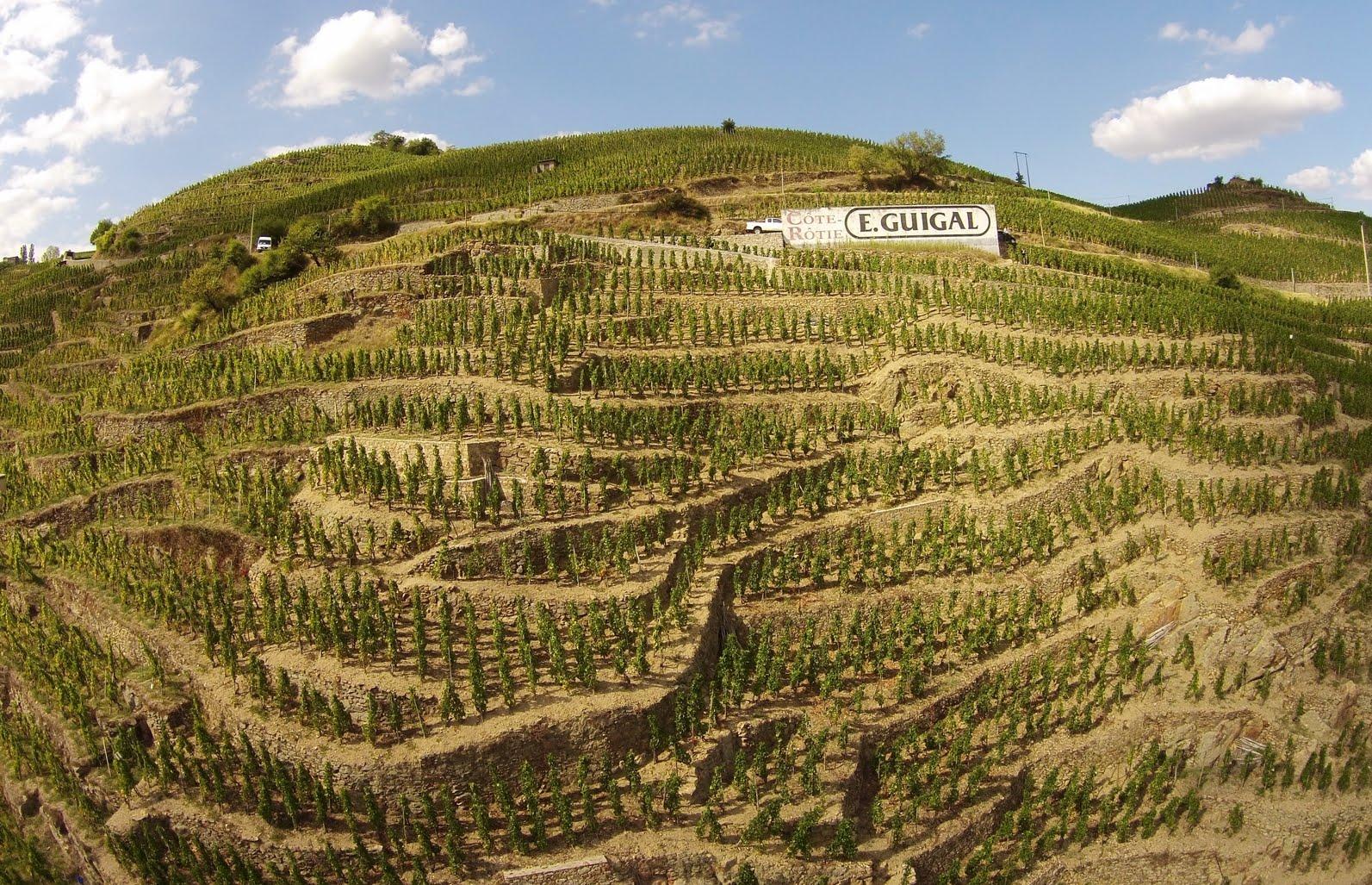 Guigal-Vineyards 2.jpg