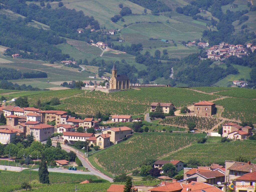 Beaujolais vineyard.jpg