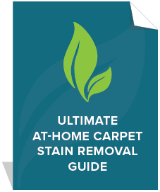 Ultimate-Stain-Removal-carpet-cleaning-guide.png