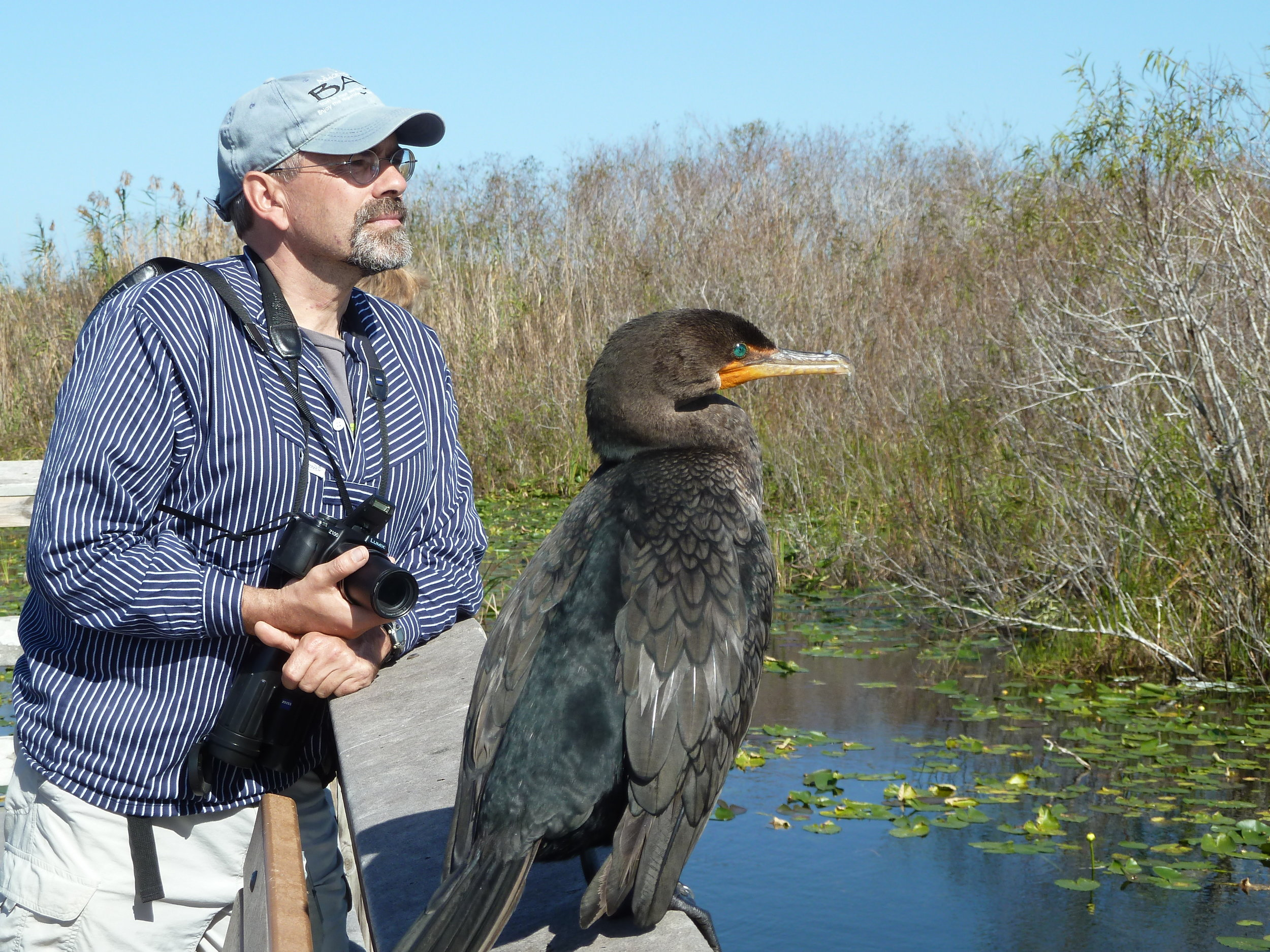 Birds on the brain: Dr. Claus Holzapfel and pal, a double-crested cormorant in the Jersey Meadowlands.  Photo credit: Hadas Parag