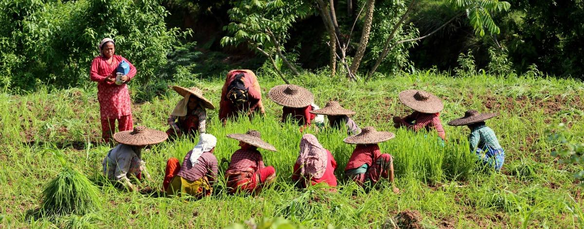 nepalese ladies.jpg